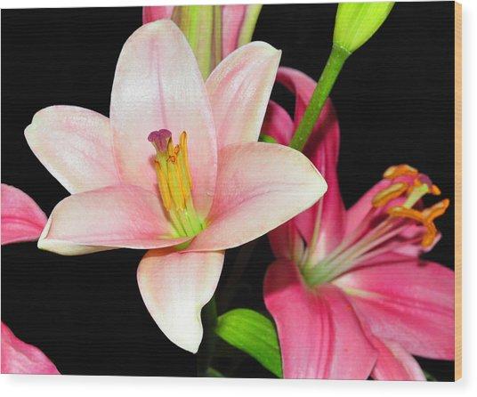 Pink Lilies Wood Print