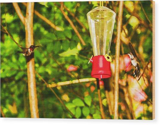 Hummingbirds - In Flight - Pit Stop Wood Print by Barry Jones