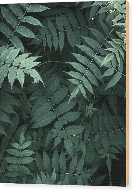 Plants In Forest Wood Print by Alexandr Sherstobitov
