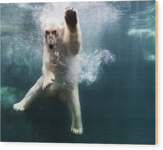 Polarbear In Water Wood Print by Henrik Sorensen