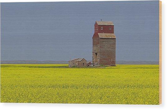 Prairie Gold Wood Print