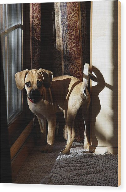 Puggle Dog Portrait Wood Print by Olde Time  Mercantile