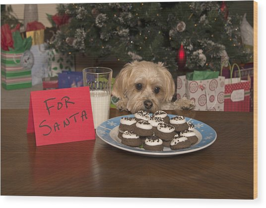 Puppy Checking Out Christmas Cookies Wood Print