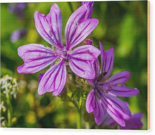 Purple Flower. Wood Print