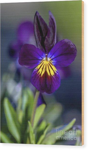 Purple Viola Wood Print