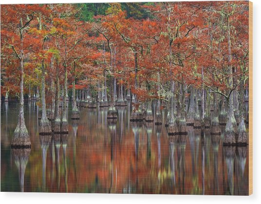 Quiet Cove Wood Print