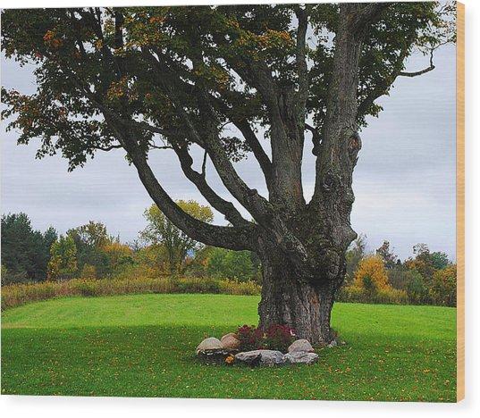 Quiet Tree Wood Print by Stephanie Grooms