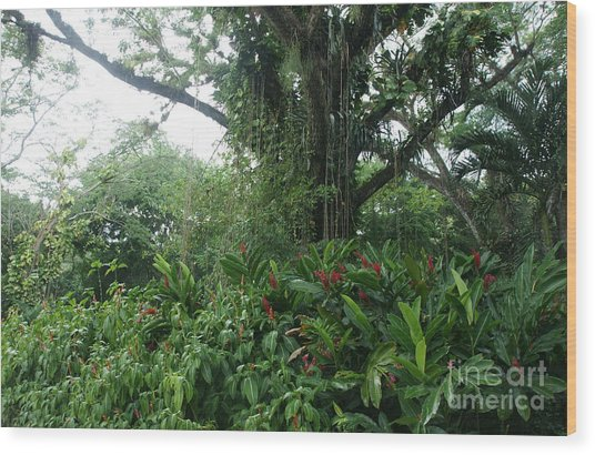 Rainforest At Ys River Wood Print by Olaf Christian