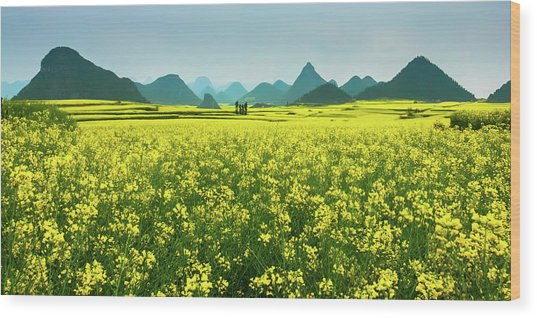 Rapeseed Flowers Wood Print by Sunnyha  Images