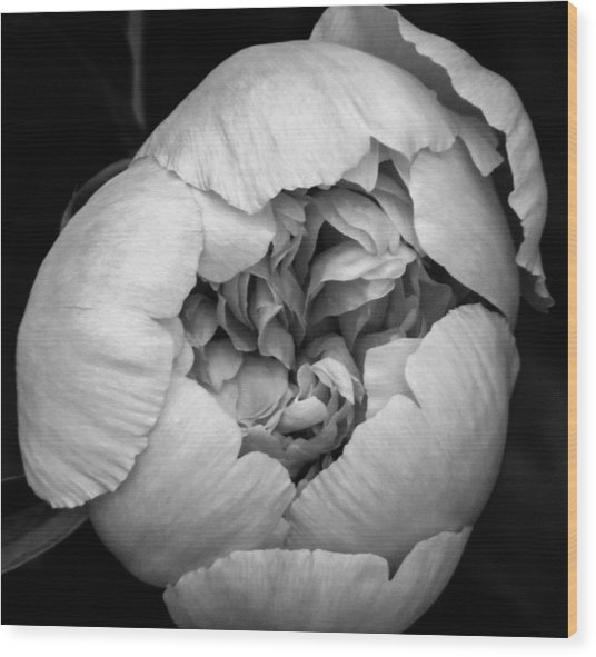 Wood Print featuring the photograph Ready To Bloom by Rosemary Legge