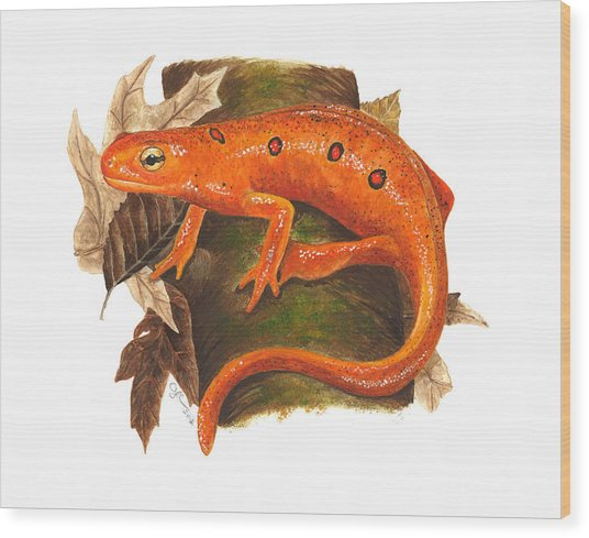 Red Eft Wood Print