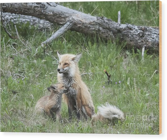 Red Fox And Kit Wood Print by Bob Dowling