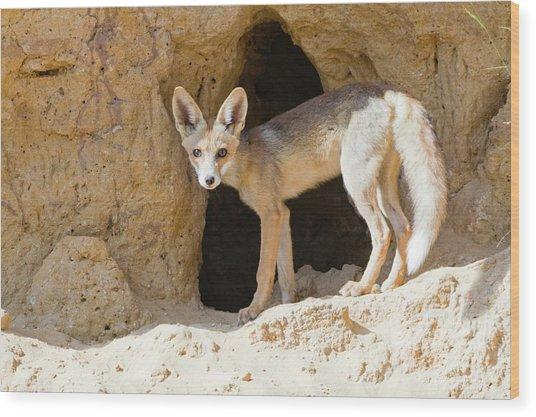 Red Fox (vulpes Vulpes) Wood Print by Photostock-israel
