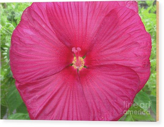 Red Hibiscus Series 2 Wood Print