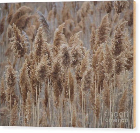 Wind Blown Redish Brown Plants Wood Print
