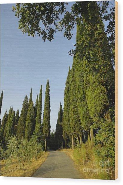 Road In Loppiano Wood Print