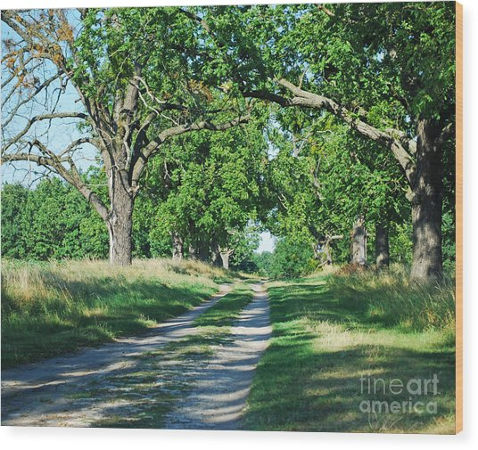 Road Wood Print by Sarka Olehlova