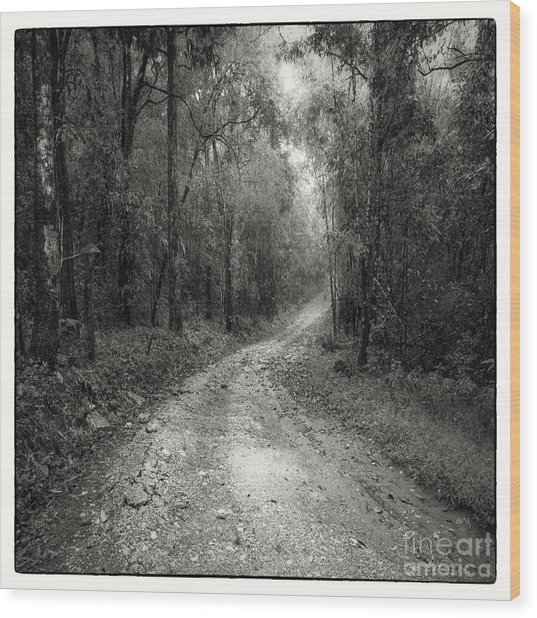 Road Way In Deep Forest Wood Print