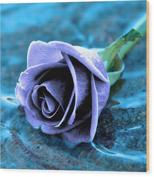 Rose In Water  Wood Print