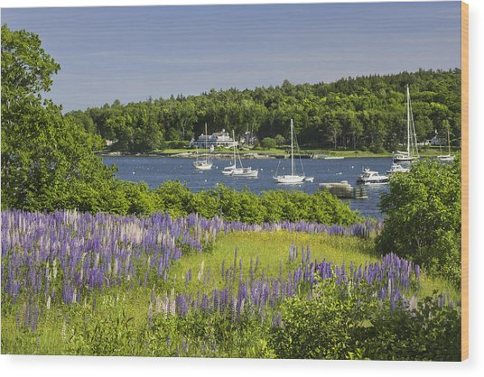 Round Pond Lupine Flowers On The Coast Of Maine Wood Print
