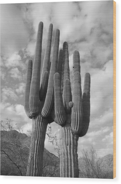 Saguaro Love Wood Print