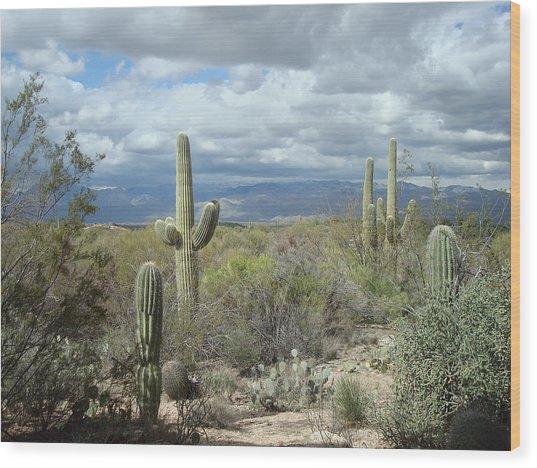 Saguaros Wood Print