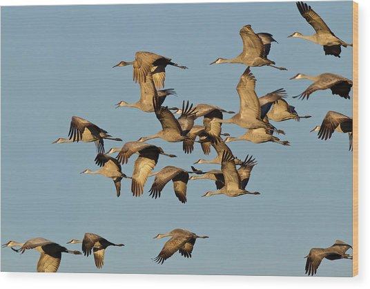 Sandhill Cranes Leave Corn Fields Wood Print