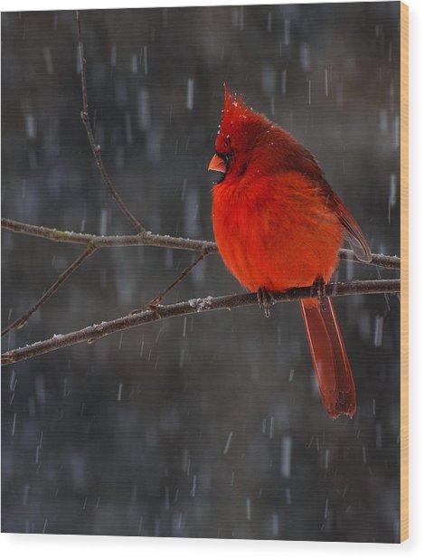 Scarlet Knight Wood Print