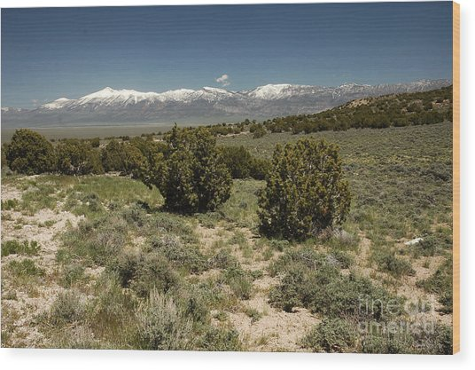 618p Schell Creek Range Nv Wood Print