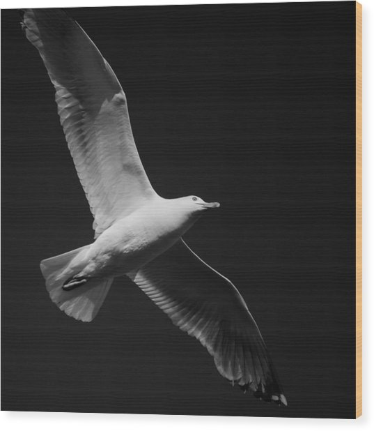 Seagull Underglow - Black And White Wood Print