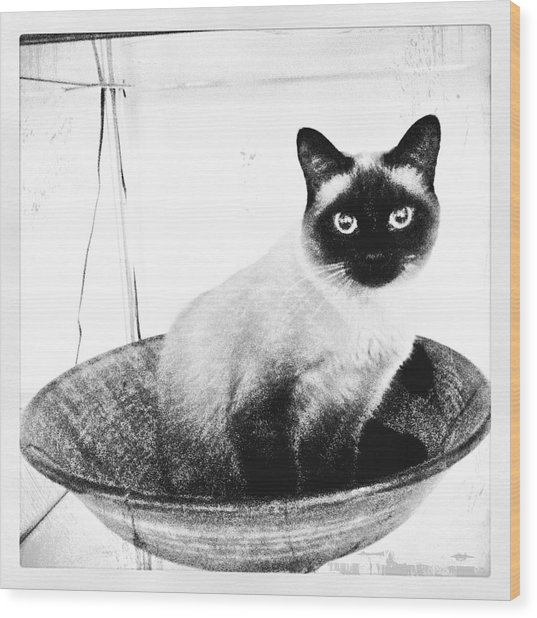 Siamese In A Bowl Wood Print