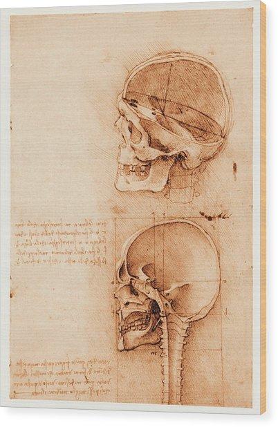 Skull Anatomy Wood Print by Mehau Kulyk