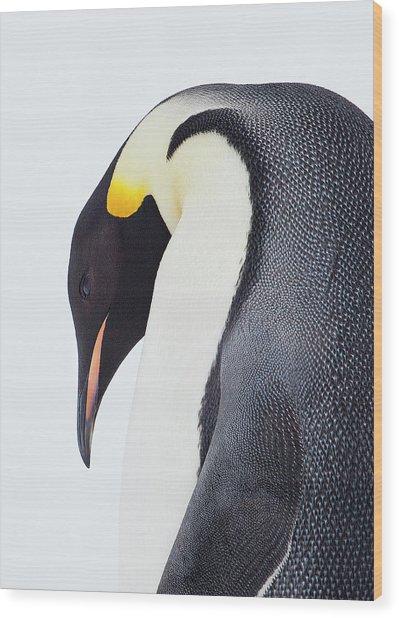 Snow Hill, Antarctica Wood Print