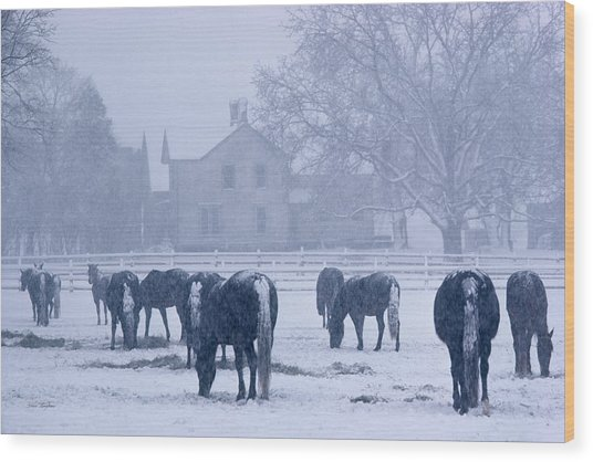 Snowfall Corral Wood Print