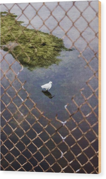 Snowy Egret  Wood Print by Photographic Art by Russel Ray Photos