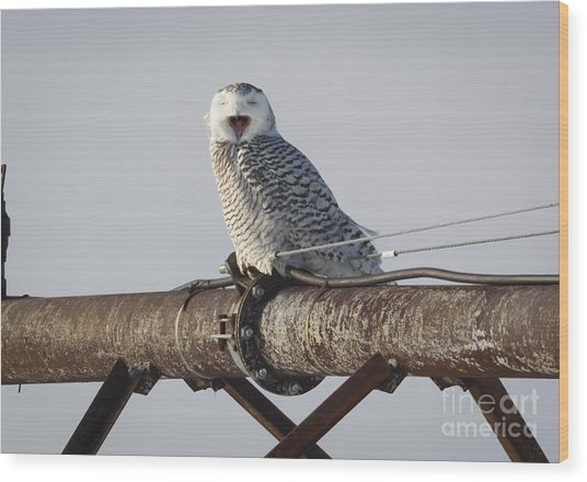 Snowy Owl In Kenosha Wood Print by Ricky L Jones