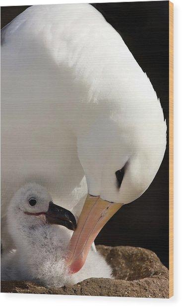 South Atlantic, Falkland Islands, New Wood Print
