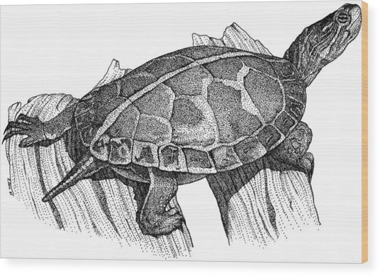 Southern Painted Turtle Wood Print