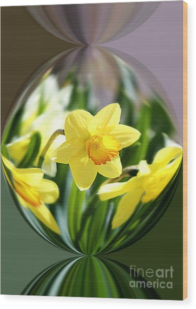 Spring Daffodils   Wood Print