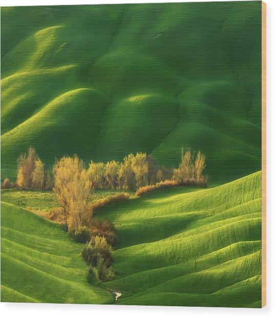 Spring On Fields... Wood Print by Krzysztof Browko