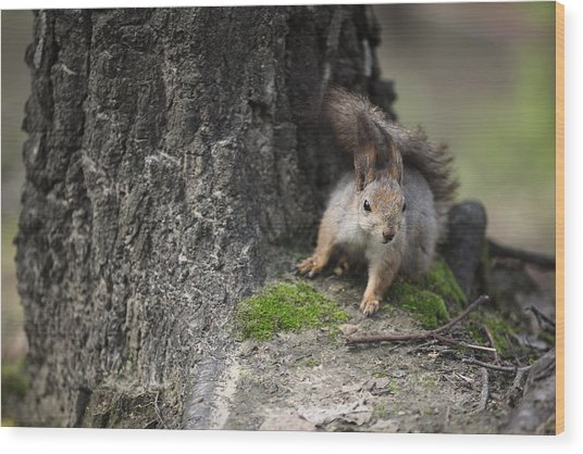 Squirrel Wood Print by Ira Gorod