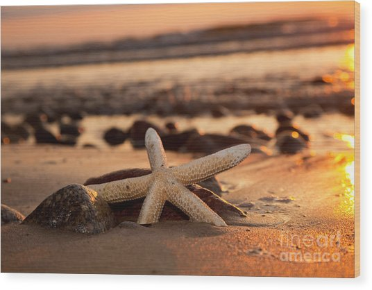 Starfish On The Beach At Sunset Wood Print