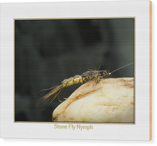 Stone Fly Nymph Wood Print by Neal Blizzard
