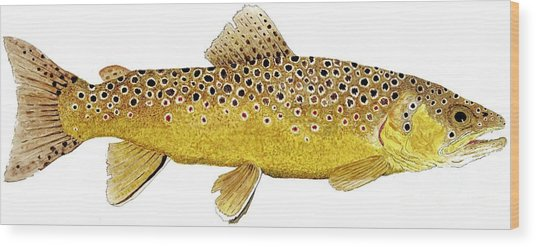 Study Of A Brown Trout Wood Print