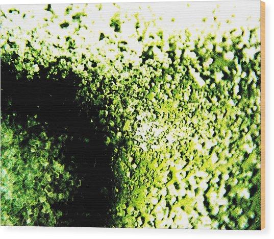 Green Sugar  Wood Print by Jason Michael Roust