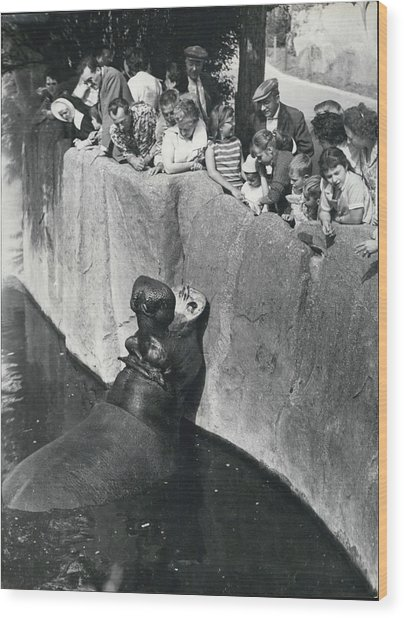 Summer Snaps At The Zoo Wood Print by Retro Images Archive