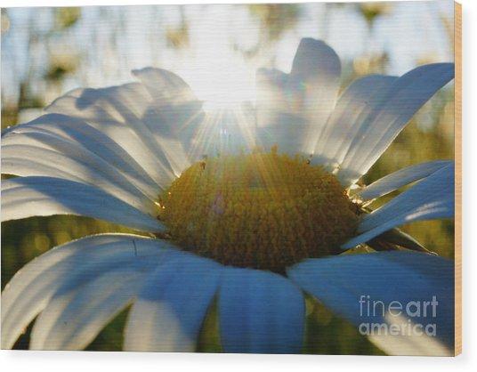 Sun Flower Wood Print by Kandids By Katy