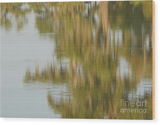 Swamp Reflections Wood Print by Kelly Morvant