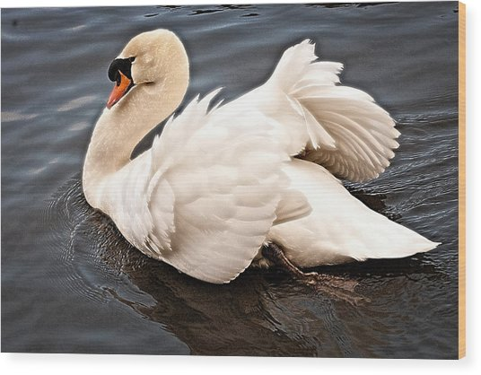 Swan One Wood Print
