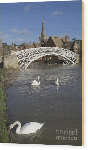 Swans At The Chinese Bridge Wood Print by Keith Douglas